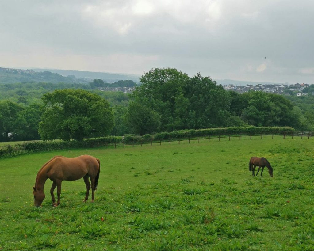 Delyth Thomas's Kiraa (left) with her stablemate and field companion 'George', otherwise known as Noble Athlete (right)
