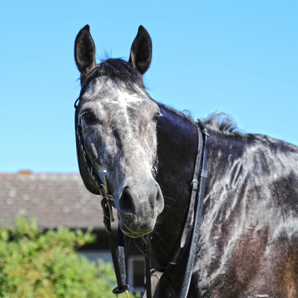 Sattam is the latest recruit to the James Owen Racing Club